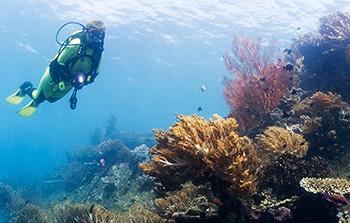 Amed Dive Program